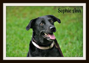 0110 Sophie Ann 5-15cvr.jpg