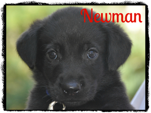 0099 neuman 11-26-12-1.jpg