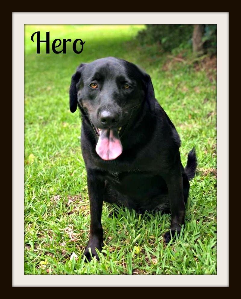 Hero-cvr.jpg