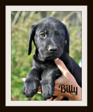 0211 Billy 1-14-1.jpg