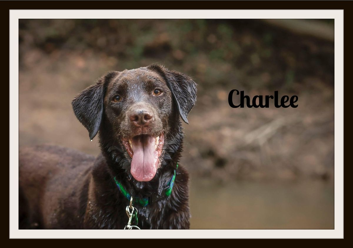 Charlee2.jpg