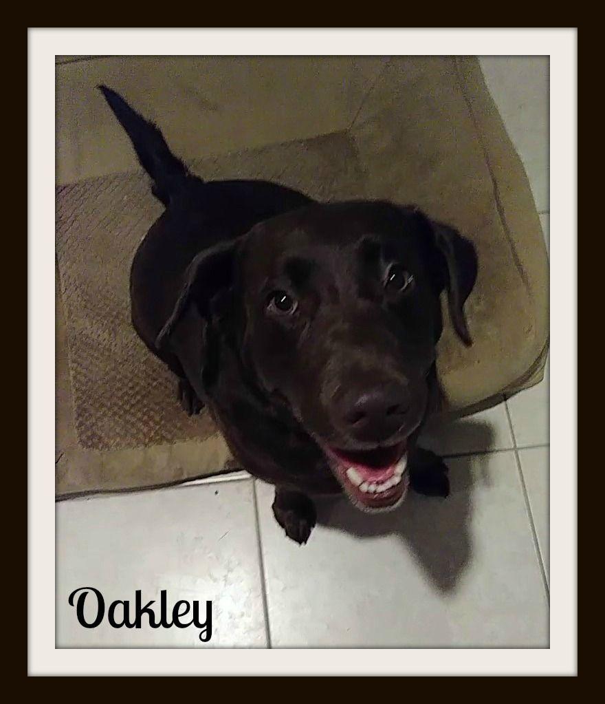 Oakley2cvr.jpg