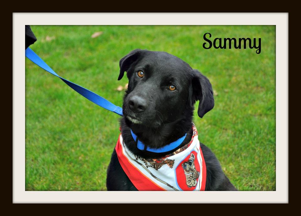 0242 Sammy 1-15cvr.jpg