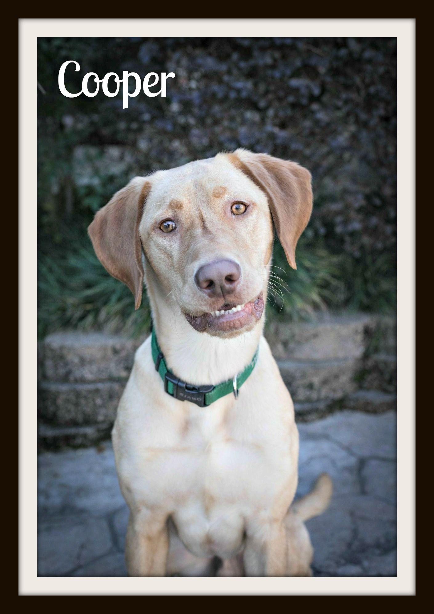 Cooper 12-16-2cvr.jpg