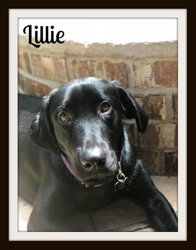 Lillie 6-29-18cvr.jpg