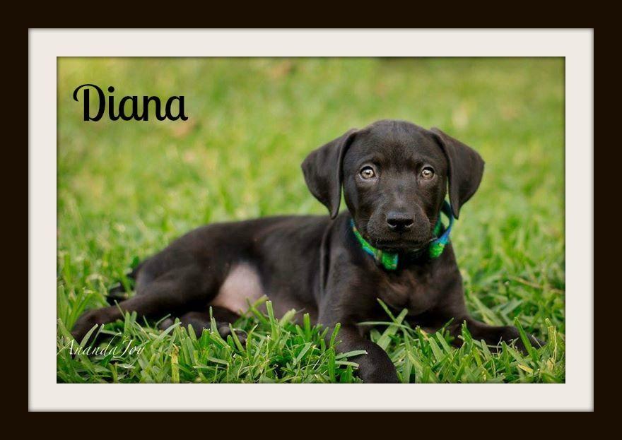 Diana5-20 (3)cvr.jpg