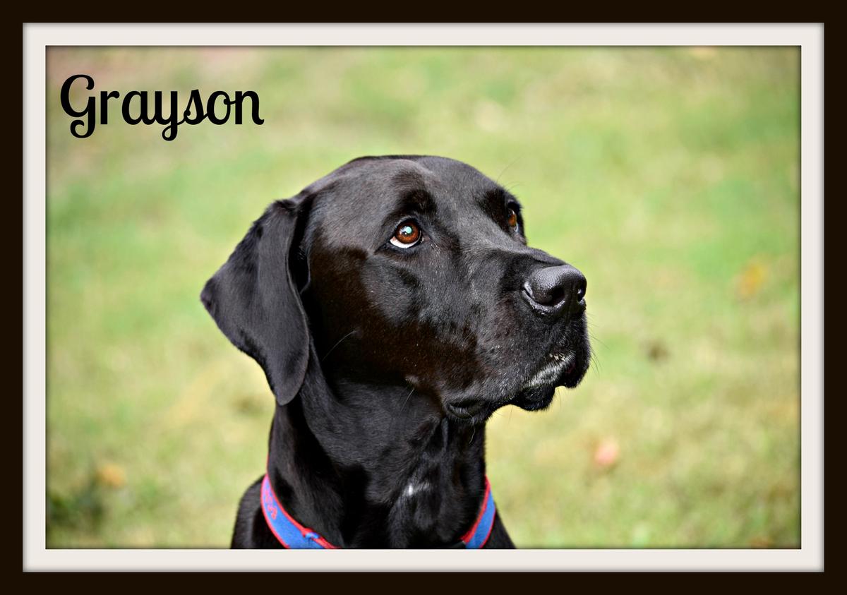 Grayson-cvr.jpg