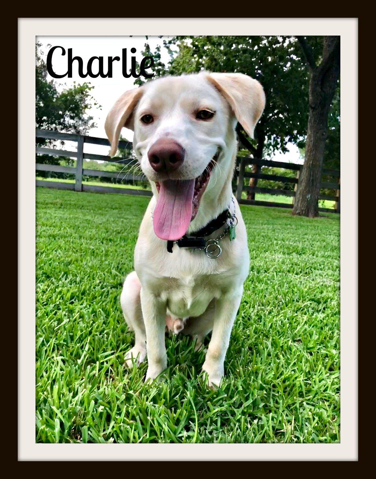 Charlie aka Boone1-cvr.jpg