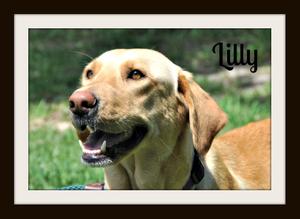 Lilly (5).jpg