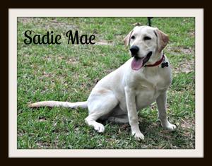 0672 Sadie Mae 3-14cvr.jpg
