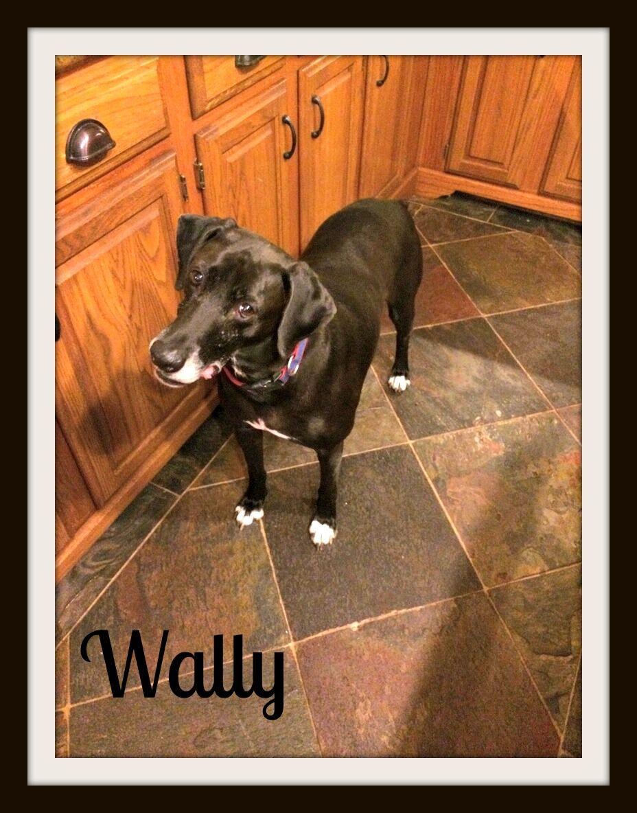 Wally-cvr.jpg
