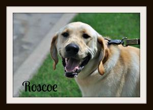 0143 Roscoe 6-14cvr.jpg