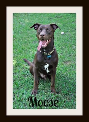 Moose (5).jpg