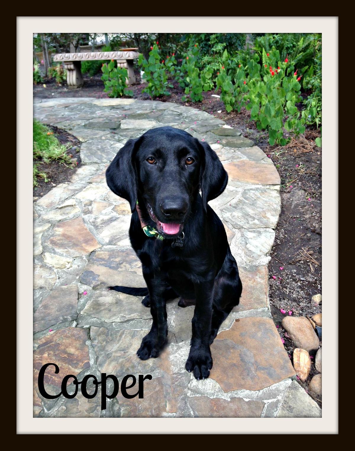 Coop sit-1.jpg