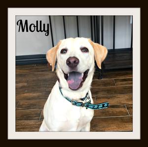 Molly (2)cvr.jpg