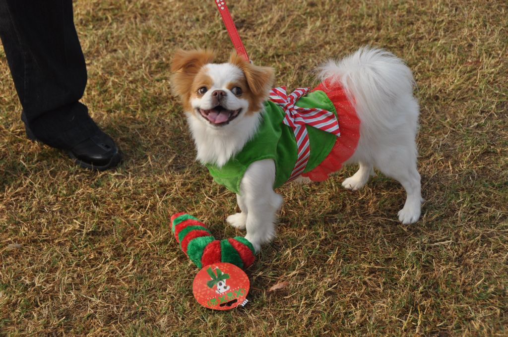 0309 PawswithClaus 12-1-12.jpg