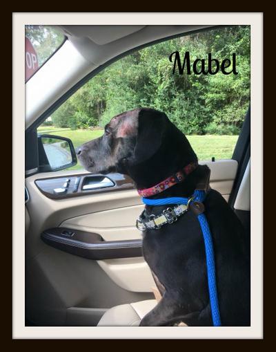 Mabel11-7cvr.jpg