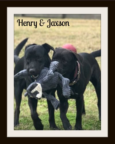 Henry and Jaxson4.jpg