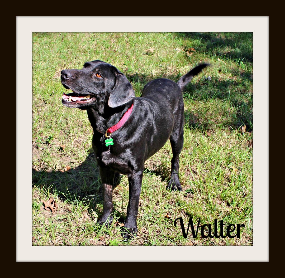 Walter stand3cvr.jpg