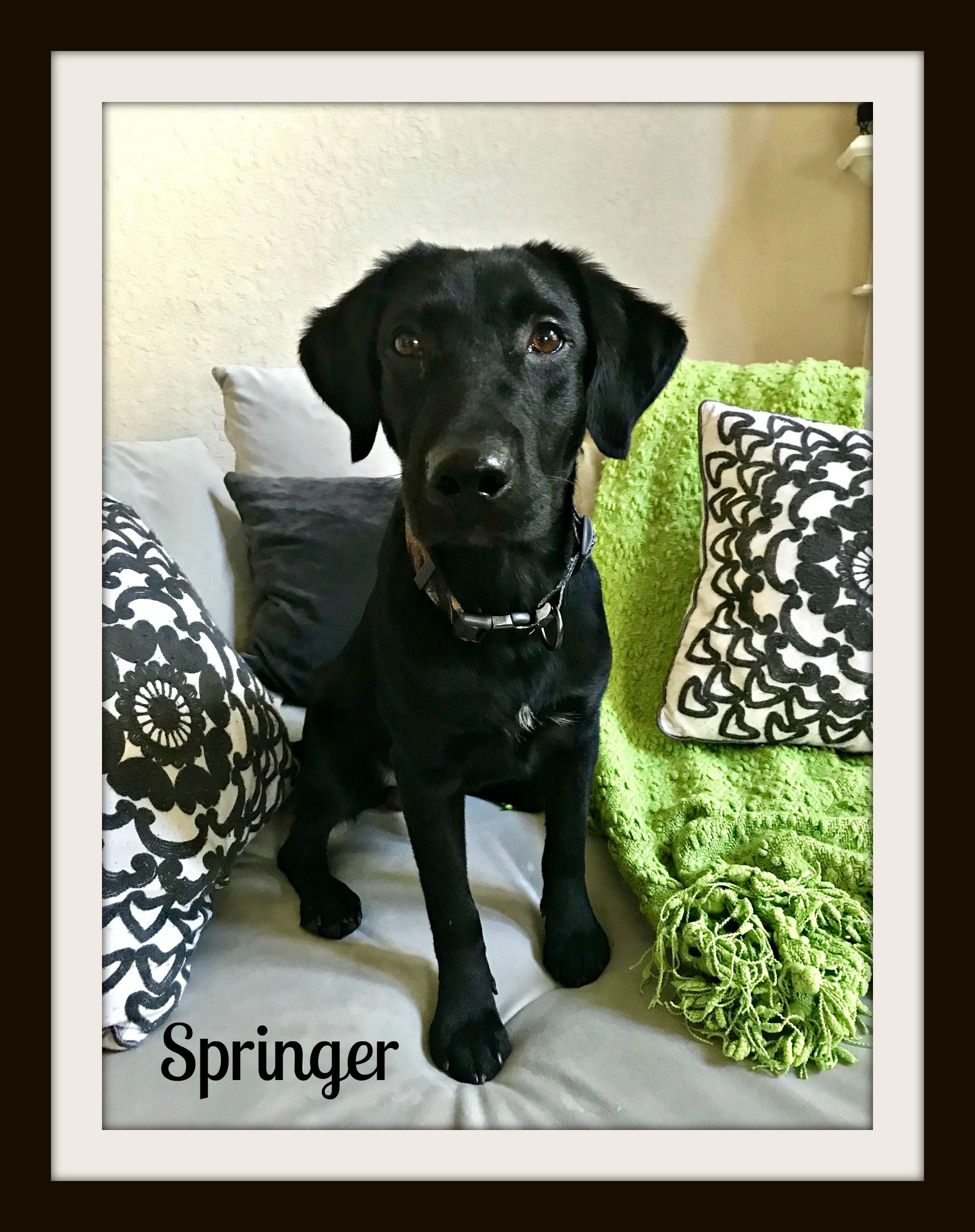 Springer1cvr.jpg