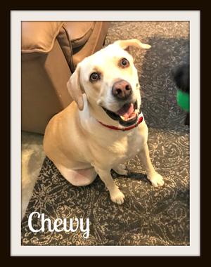 Chewy (4)cvr.jpg