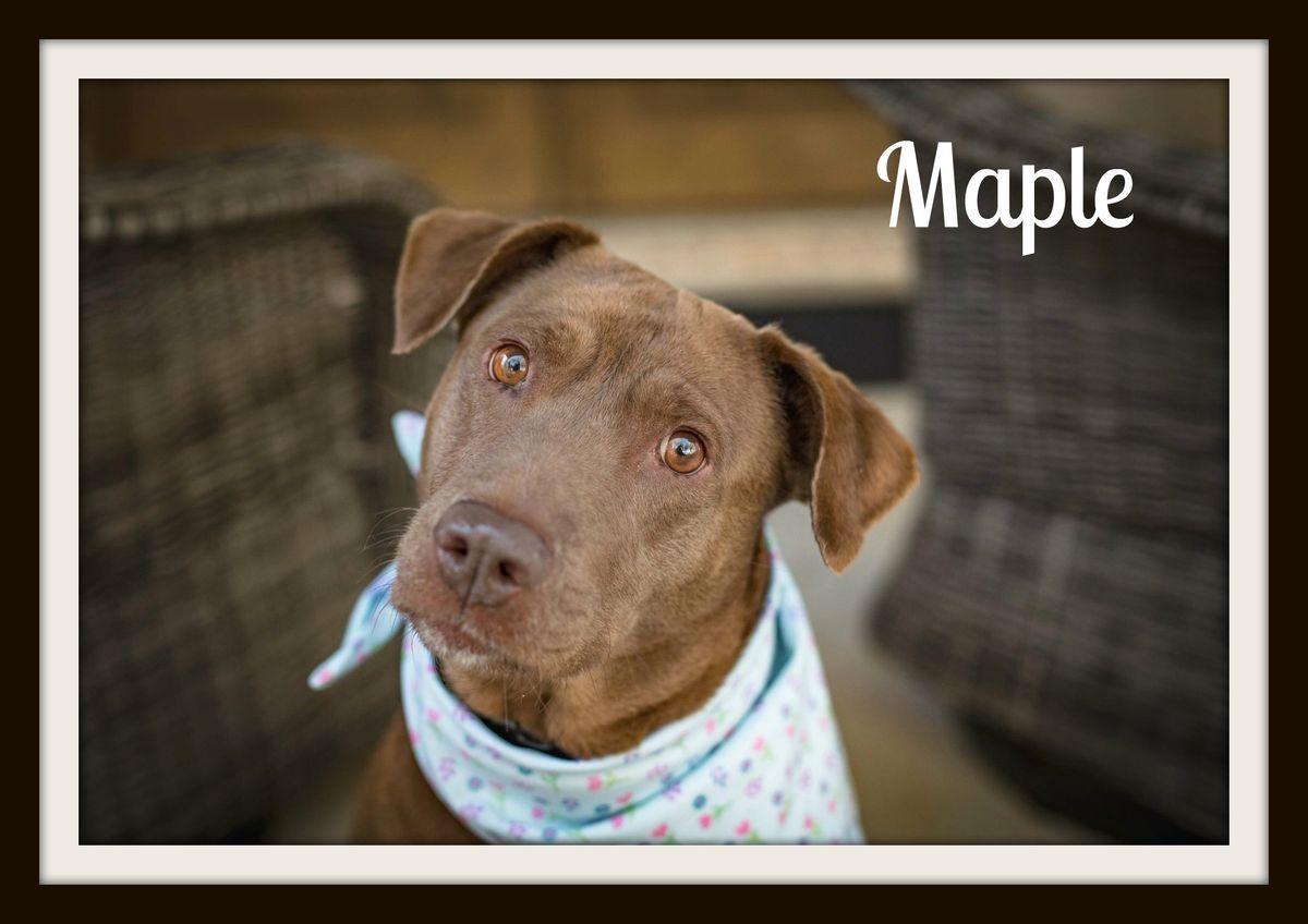 Maple1cvr.jpg