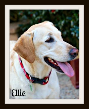 Ellie1cvr.jpg