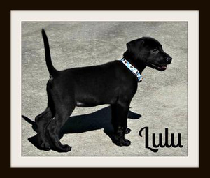 Lulu1.jpg