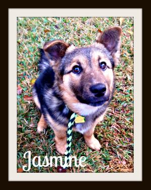 Jasmine1cvr.jpg