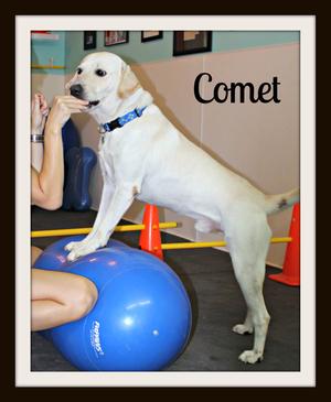 Comet-cvr.jpg