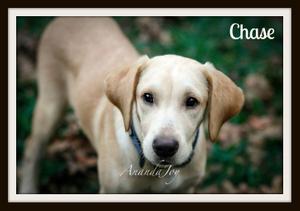 Chase5cvr.jpg