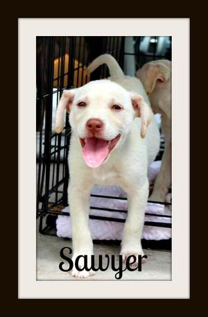 Sawyer in crate crop.jpg