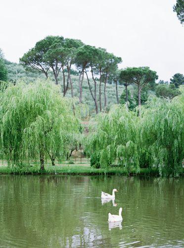 italian swans