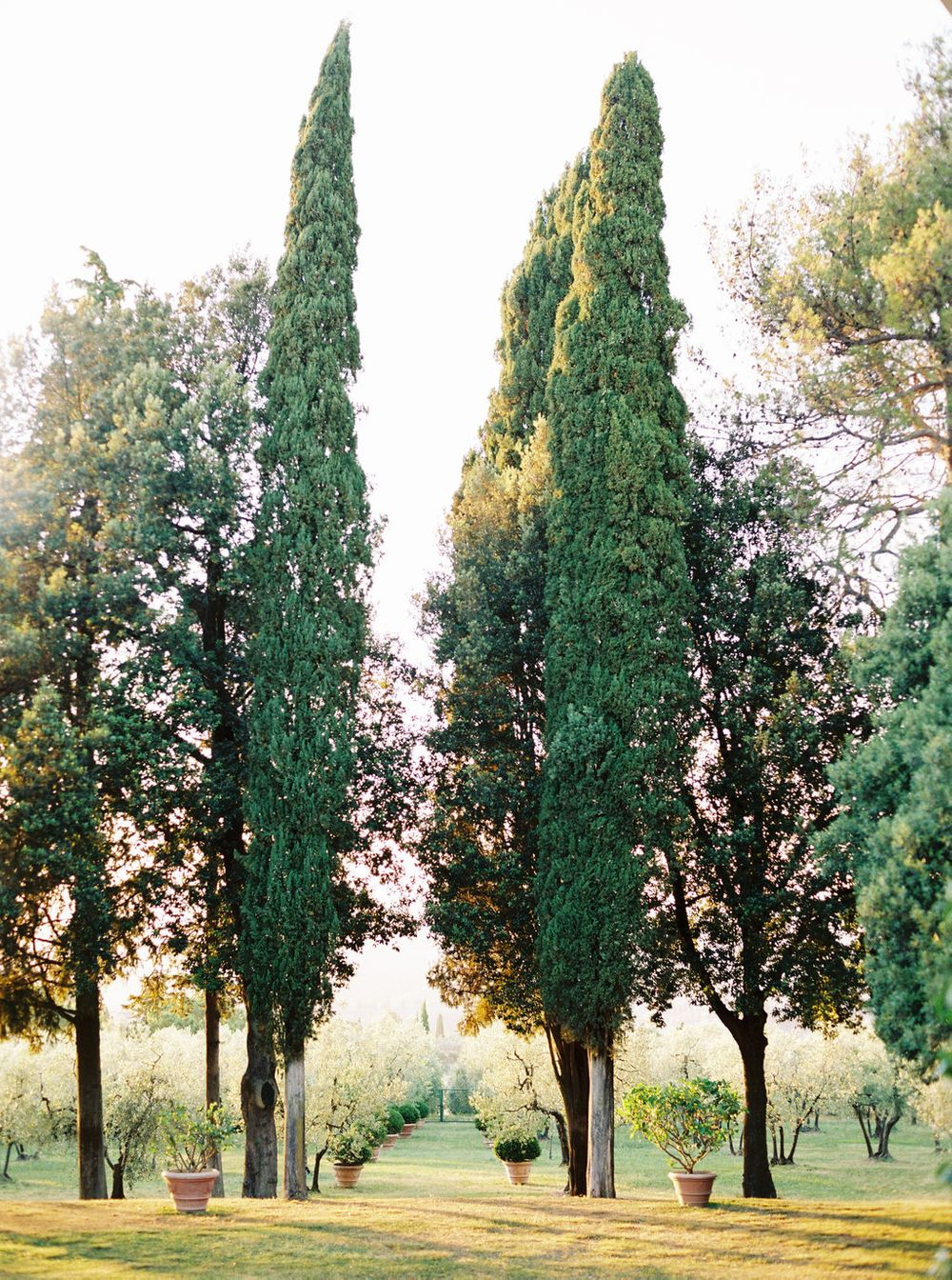 those cypress trees!