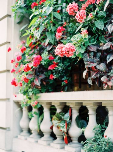 pretty italian flowers