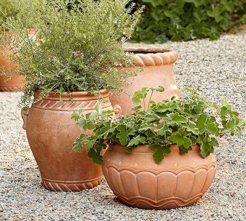 terracotta garden planters