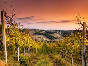 Vineyards-Umbria.jpg