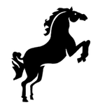 wild horse images.png