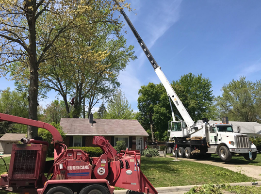Hard to reach tree removal service