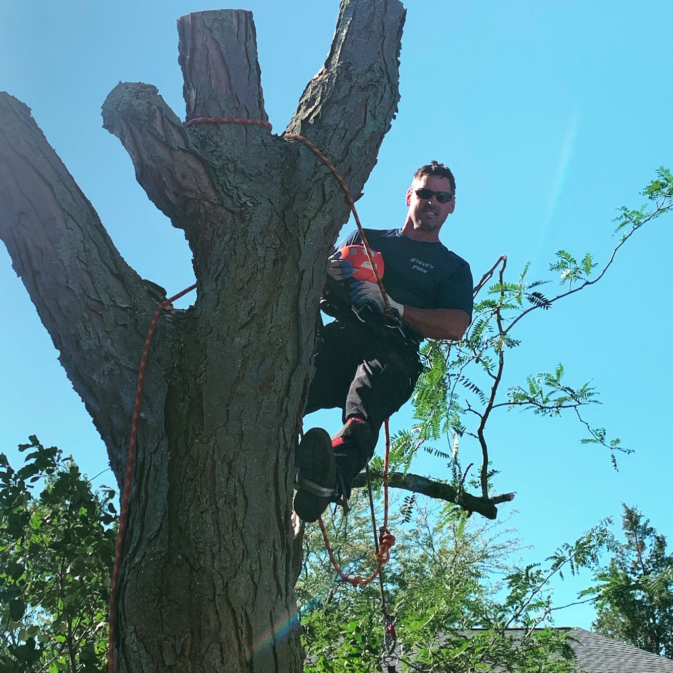 Steve climbing and tree trimming