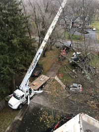 Hard to reach tree removal
