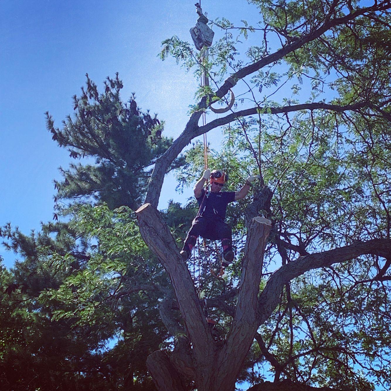 Tree crane removal