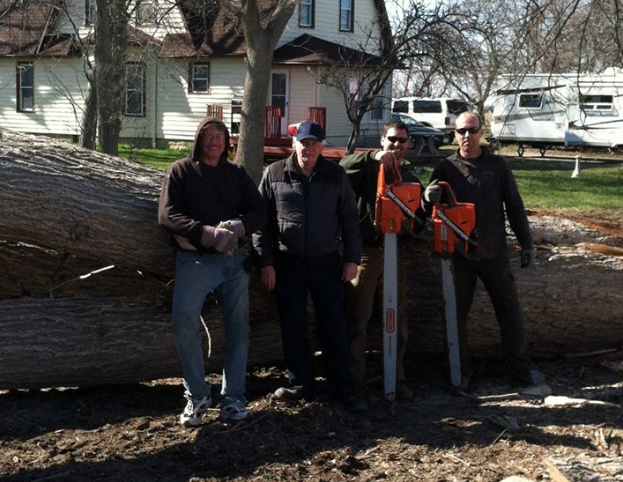 Professional tree removal team
