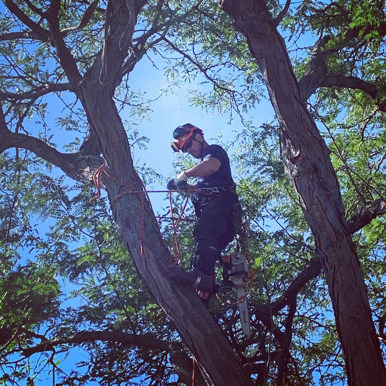 Tree Removal Climbing