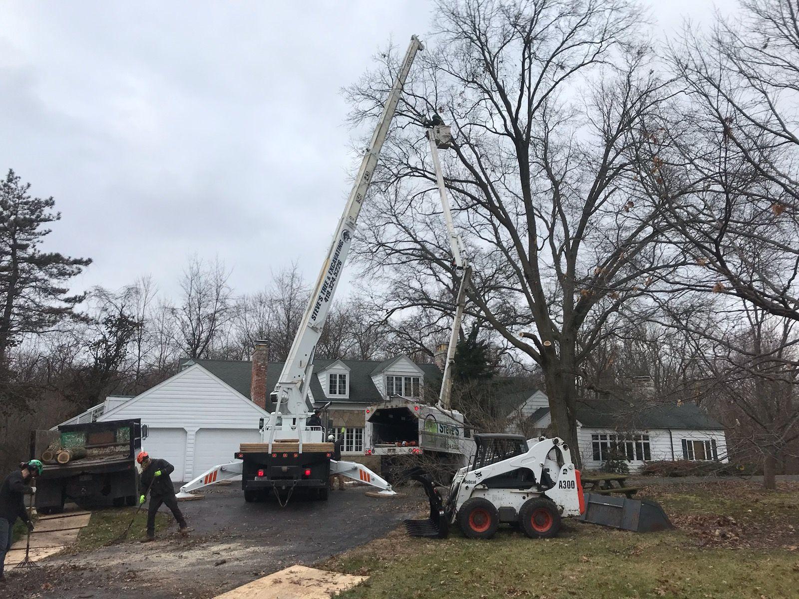 Tree crane removal service