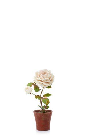 large_vladimir-kanevsky-white-m-o-exclusive-white-rose-2.jpg