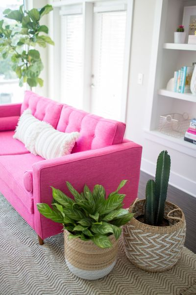 hot pink couch with cacti.jpg