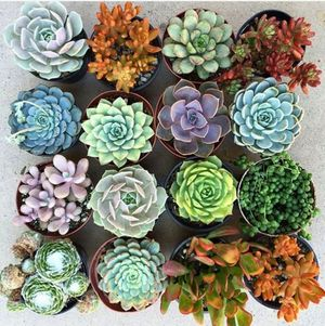 may succulents.jpg