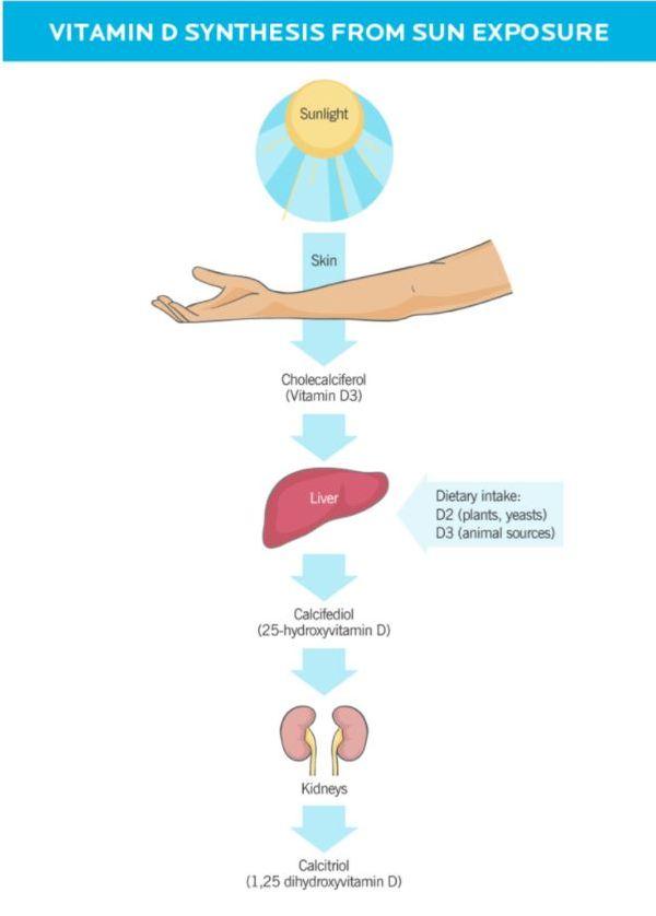 vitamin d process.JPG