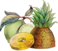 pineapple lime.png